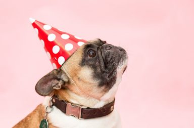 The Essential Dog Party Supplies Checklist